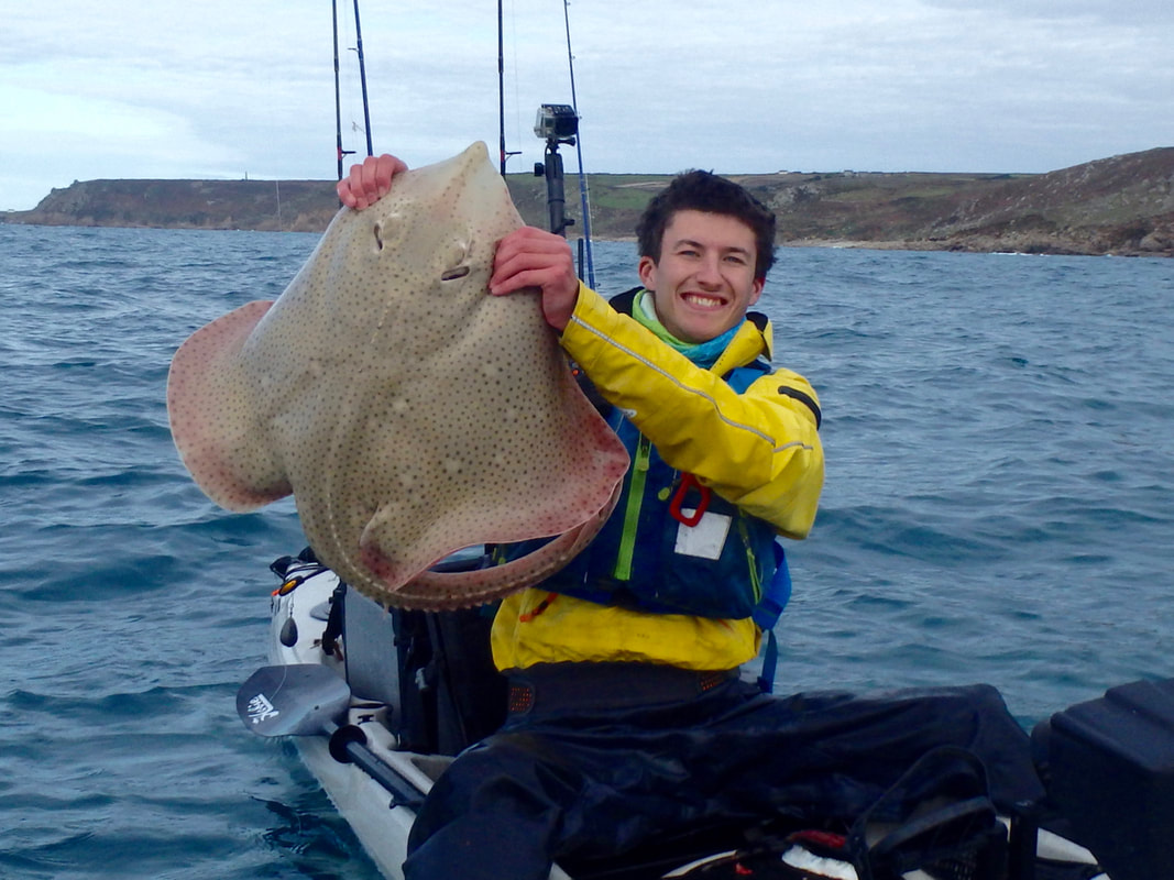 20lb Blonde Ray caught in Cornwall from the Kayak