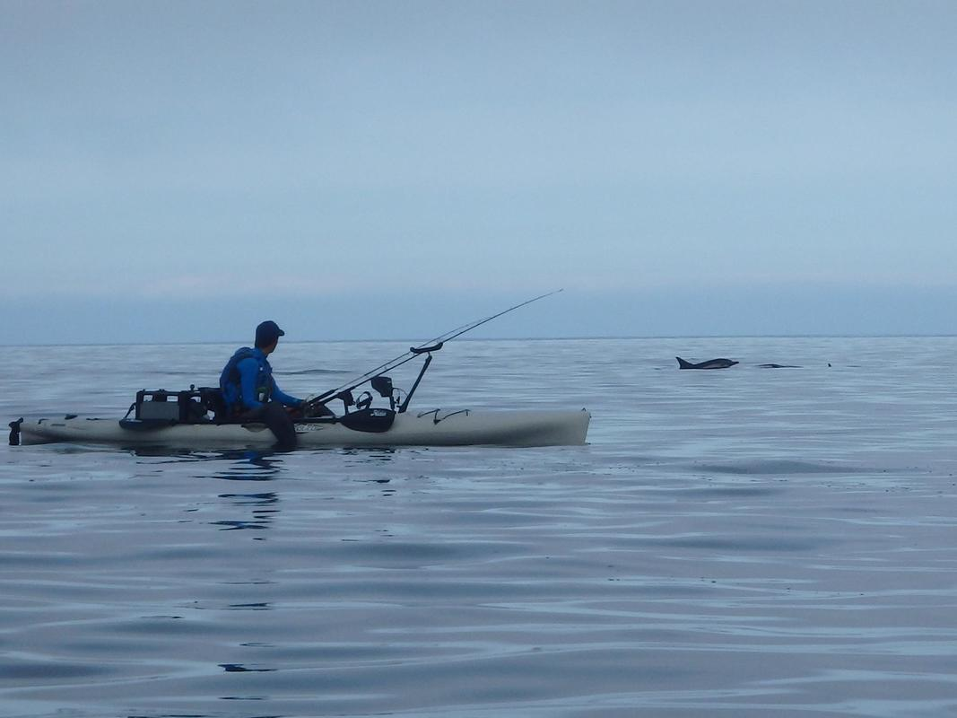 Kayak Fishing alongside Dolphins