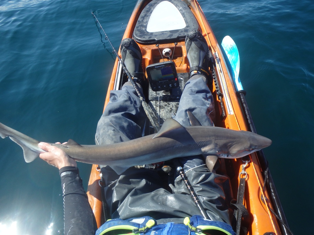 Tope Kayak Fishing in Cornwall