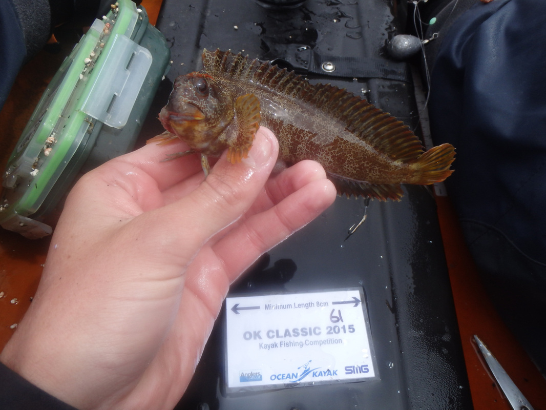 Tompot Blenny caught at the Ocean Kayak Classic 2015