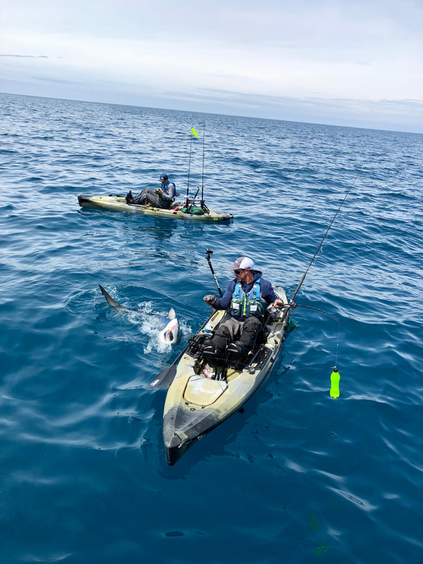 Ben Wallis catching a blue shark from his Hobie Outback