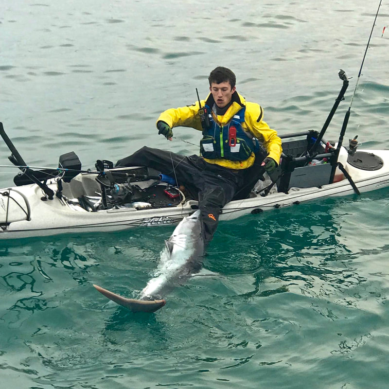 Porbeagle Shark caught from a Kayak
