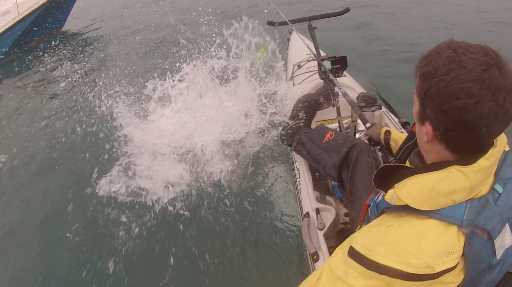 Porbeagle Shark splashes beside the kayak!